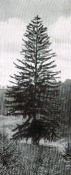foto 1900r folder 1938 r